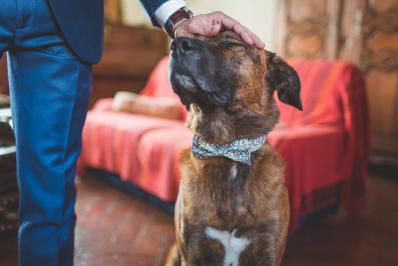 Photos chien mariage